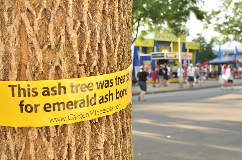 Photo of tree being treated for Emerald Ash Borer.  Image by MJI Photos