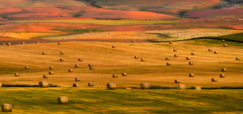 Image of hayfield in Montana at twilight.  Image is by Sathish J from flickr.