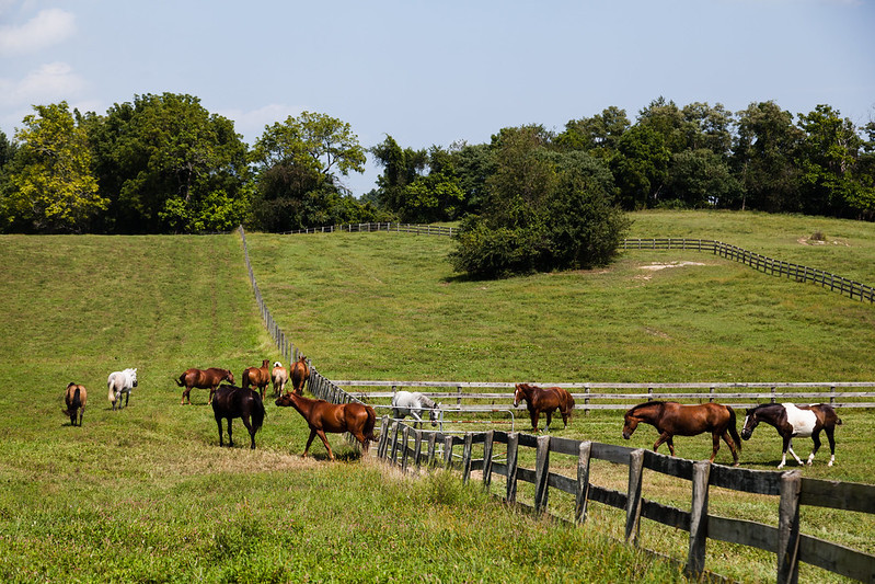 Fence in pasture with horses by Chesapeake Bay Program