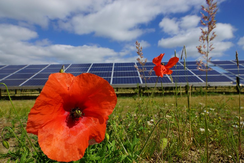 Solar panel in field with poppy flowers. Image by Solar Trade Association via flickr.com