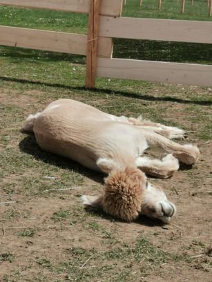Remus beim Sonnenbad