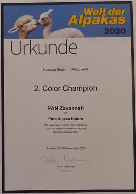 2. Color Champion - Stuten white