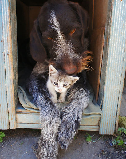 dog-and-cat-211503_1920.jpg