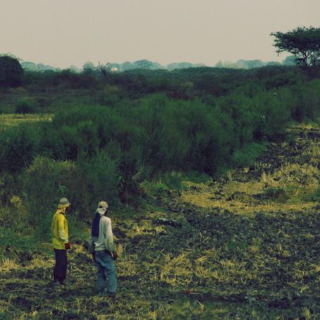 Agricultura y COVID-19: La seguridad alimentaria tras la pandemia