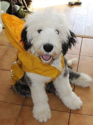 rain coat (3).jpg