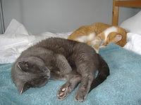 sheilacats.jpg