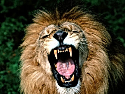 Lion's Mouth of the Beast