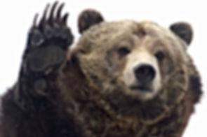 Bear Lifted Up