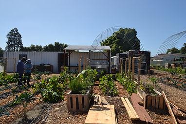 firehouse farm 9.JPG