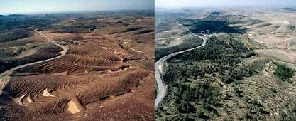 reforestation-time-contrast.jpg