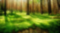 Beautiful-Forest-Green-Wallpaper-HD (1).