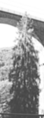 bridge-Large-2_edited_edited_edited_edit