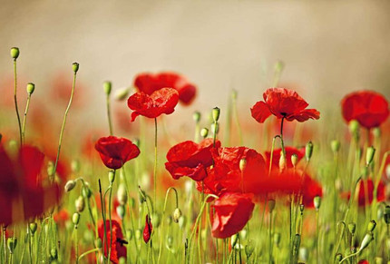 Gallipoli: a song composed in memory of the ANZACs