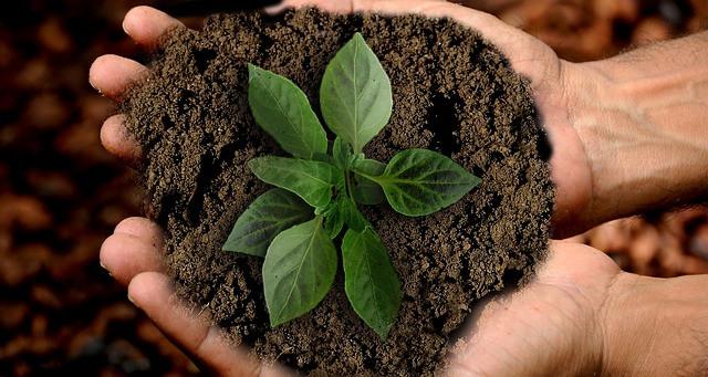 Mãos segurando terra e planta