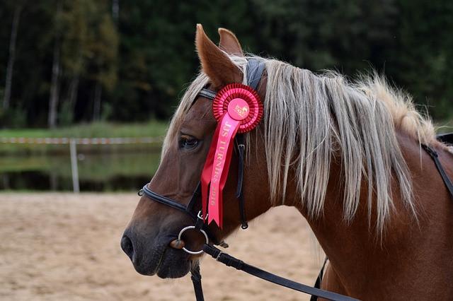 Cavalo com escarapela vermelha com suporte cabeçada