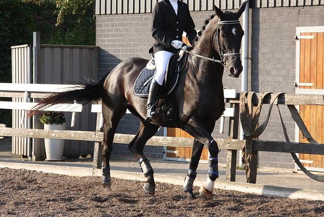 Cavaleiro montando