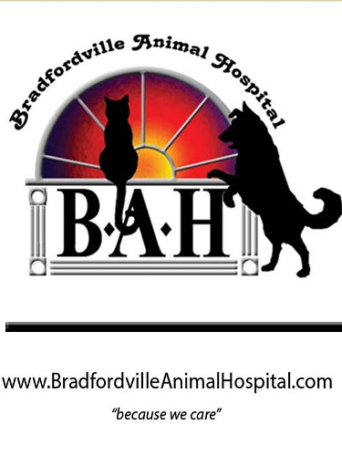 bah_logo_color_300dpi_edited.jpg