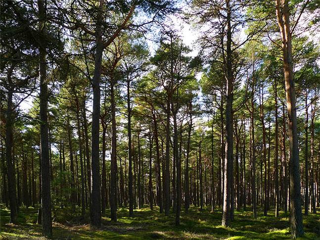 balblair woods.jpg