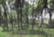 UCMFKSOLQtKOcNj3Kl2bDw_edited.jpg