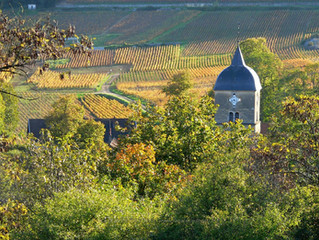 THE CLIMATES OF BURGUNDY