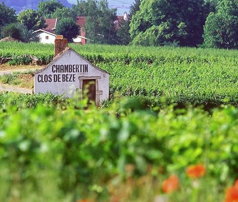 Gevrey-Chambertin-Photo-Alain-Doire-Bour