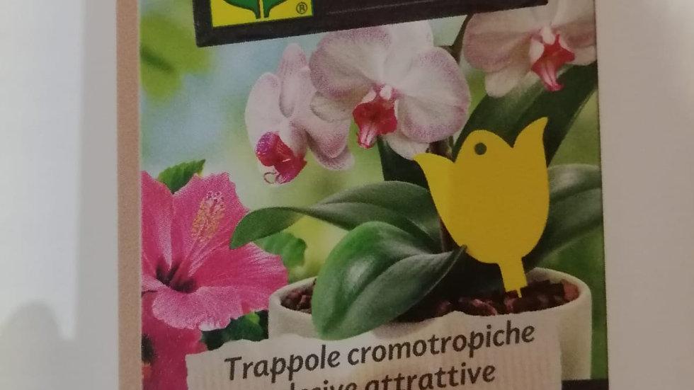 Compo Trappola Cromotropiche insetticida 10 pz