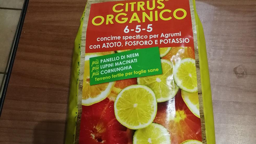 I consigli dell'esperto - Citrus Organico 1.5 kg