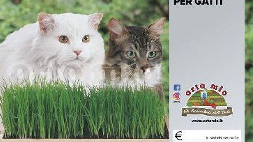 Erba gatto 1vaschetta