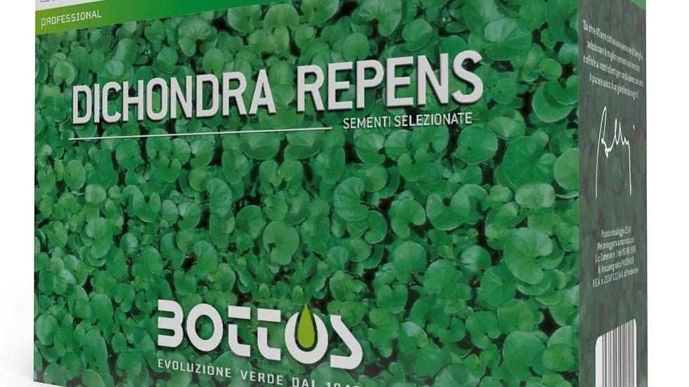 Bottos DICHONDRA REPENS 500 g semi prato