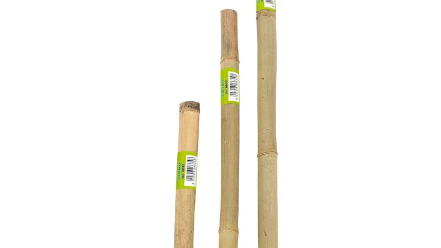 canna bambu pesante h 1.00