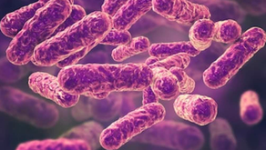 Part 2: What is Bartonellosis? What's my treatment plan?