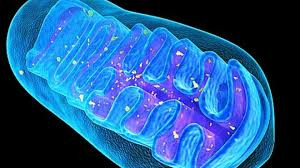 Mitochondrial Make-Over