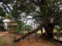 IMG-7334.jpg