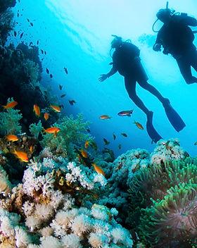 Buceador y corales