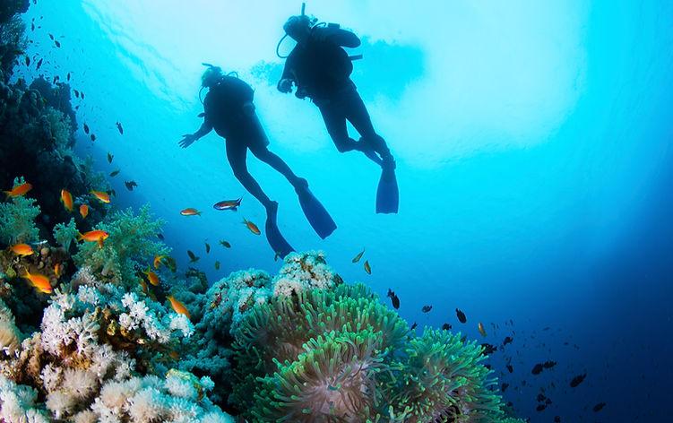 Marine Litter Divers