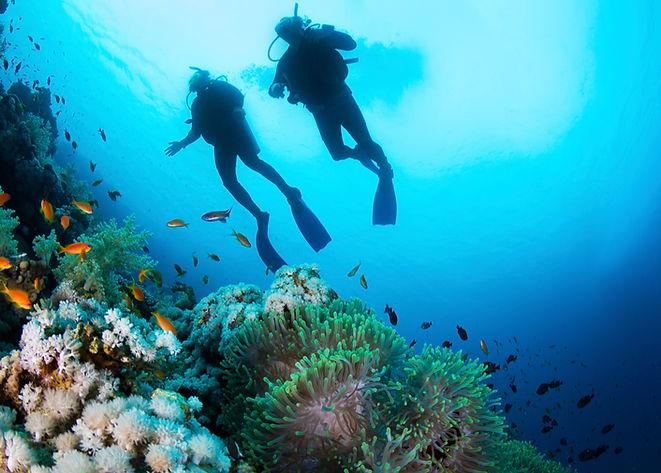 Scuba Diver и кораллы