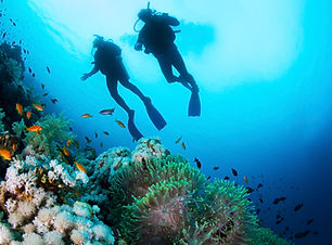Diving with Calypso Charters, Riviera Maya, MX