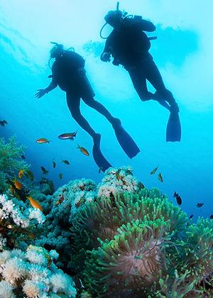 水肺潛水員和珊瑚