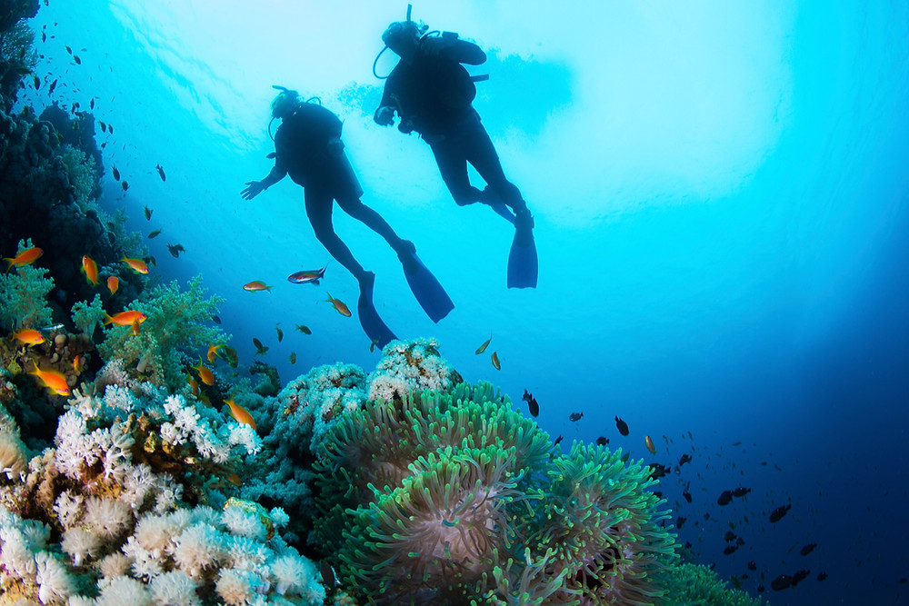 Two scuba divers underwater diving near a coral reef.