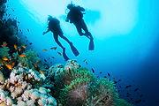 Taucher und Korallen