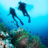 Snorkelling & Diving