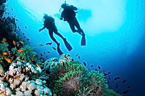 Scuba Diver e corais