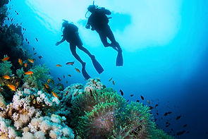 スキューバダイバーとサンゴ