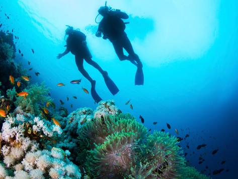 Goda nyheter: Korallrevet utanför Fiji återhämtar sig