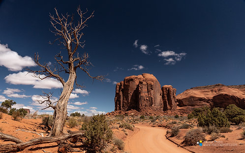 Utah - Monument Valley - Dead Tree