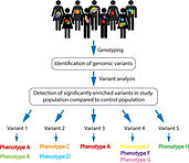 lossy-page1-1200px-Genotype-first_approa
