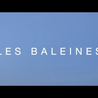 Les Baleines (2016)