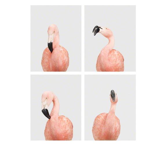 Sharon Montrose Flamingos
