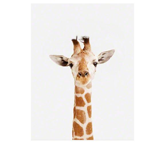 Sharon Montrose Giraffe