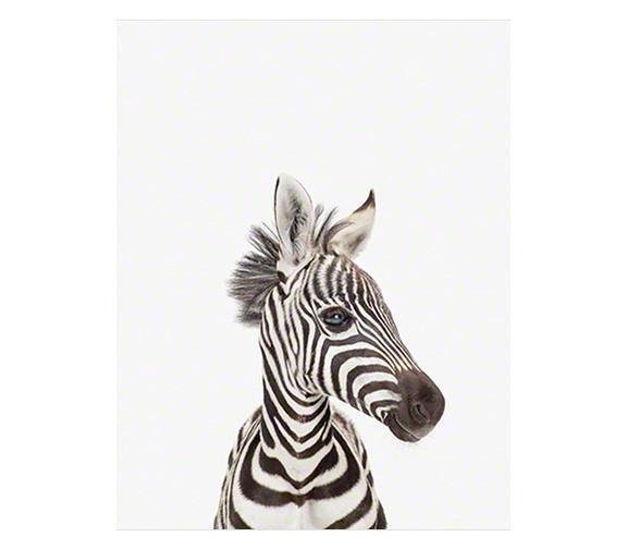 Sharon Montrose Zebra